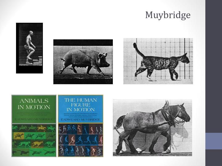 Muybridge