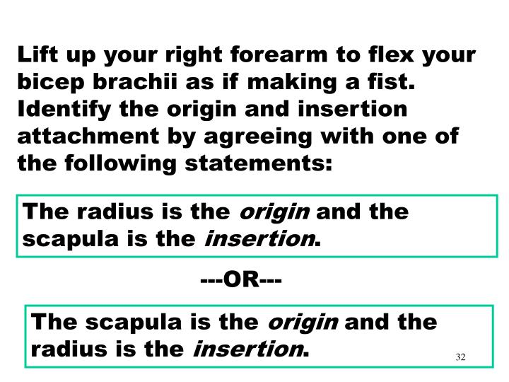 Muscles – Origin or Insertion