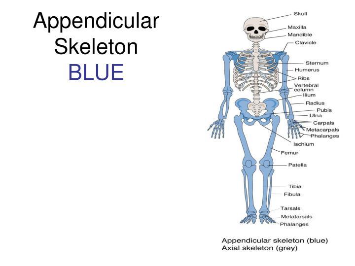 Appendicular
