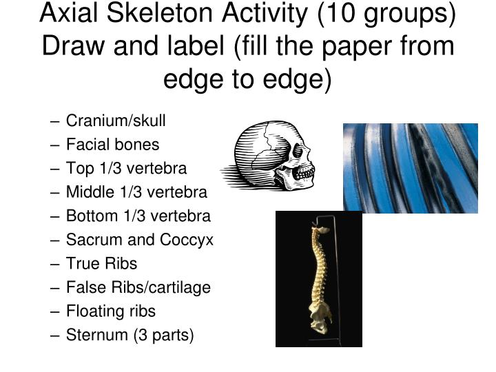 Axial Skeleton Activity (10 groups)