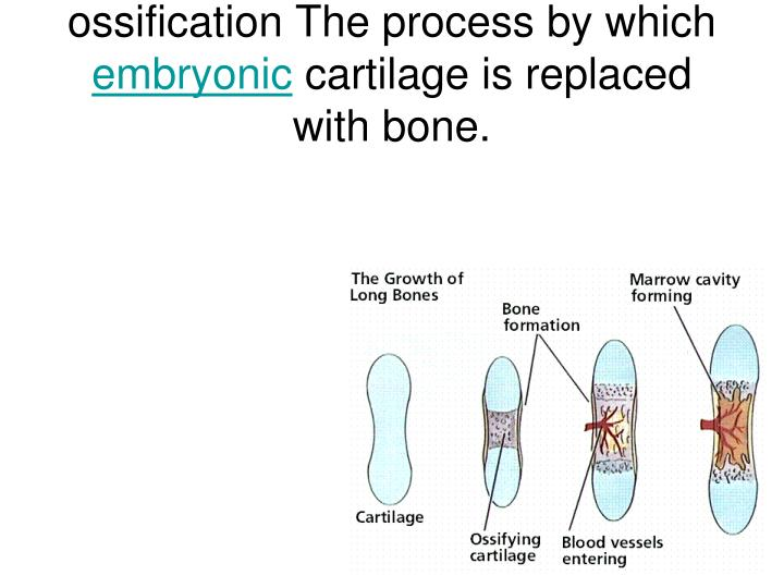ossification The process by which