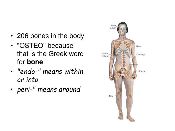 206 bones in the body