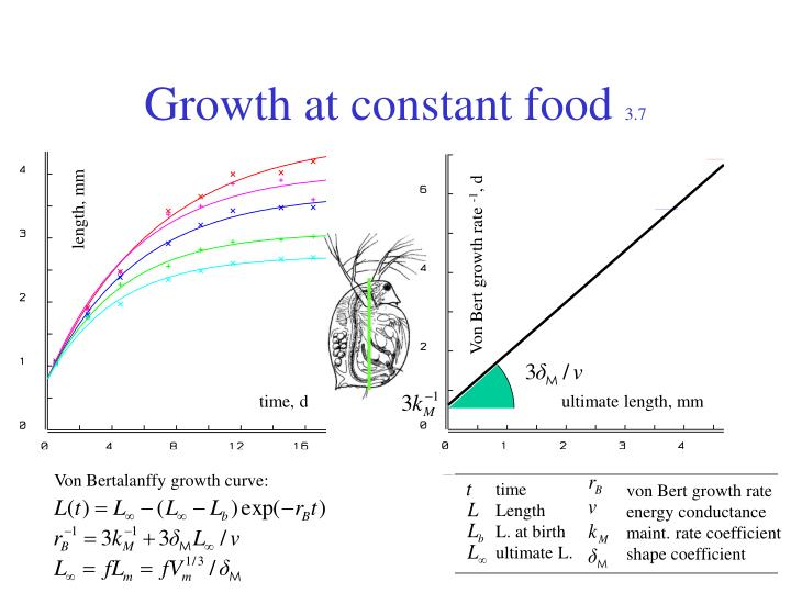 Growth at constant food