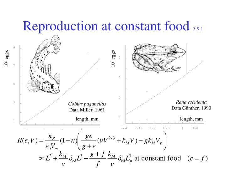 Reproduction at constant food