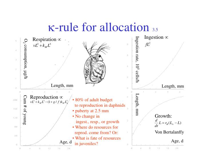 -rule for allocation