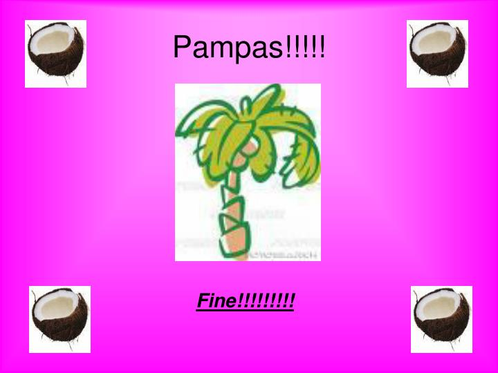 Pampas!!!!!