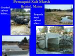 pemaquid salt marsh bristol maine