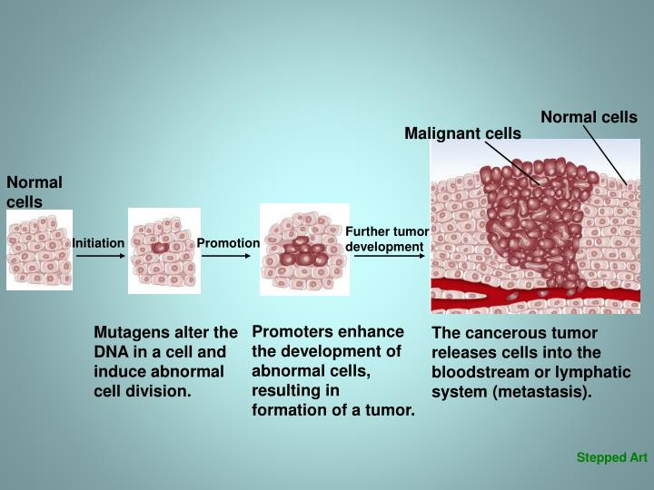 Normal cells