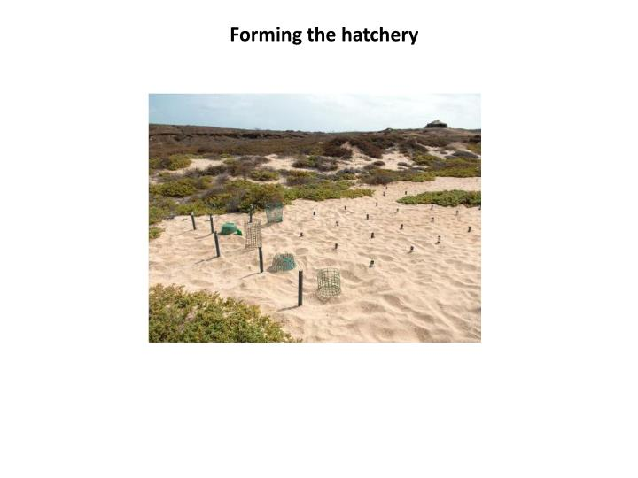 Forming the hatchery