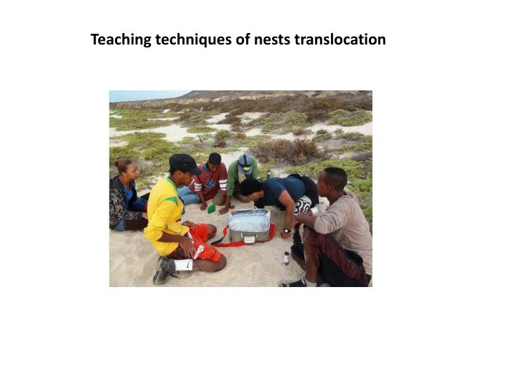 Teaching techniques of nests translocation