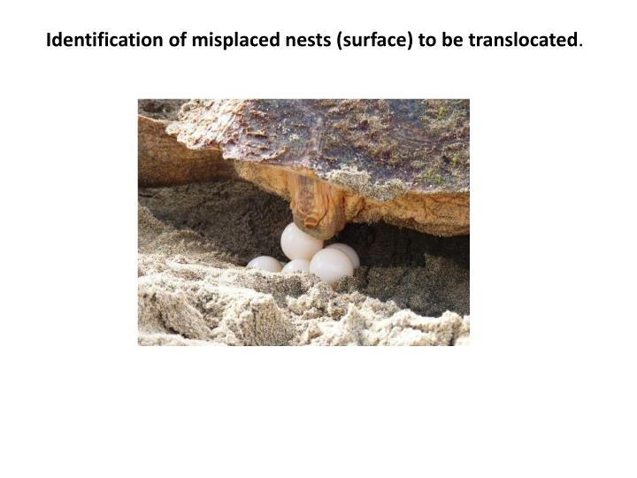 Identification of misplaced nests (surface) to be translocated