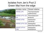 isolates from jen s pool 2 green mat from the edge