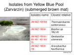 isolates from yellow blue pool zarvarzin submerged brown mat