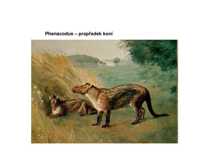 Phenacodus – prapředek koní