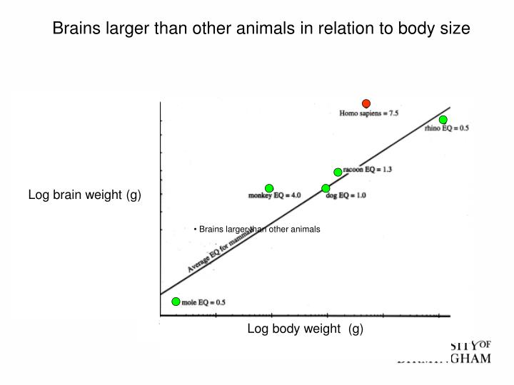 Brains larger than other animals in relation to body size