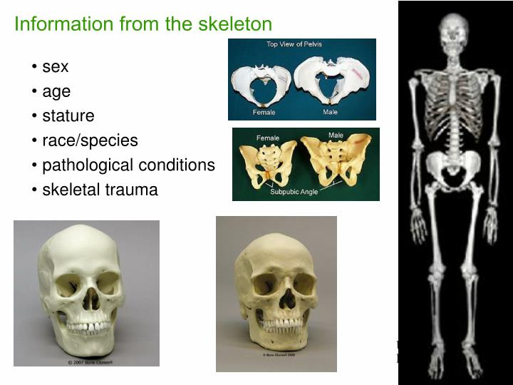 Information from the skeleton