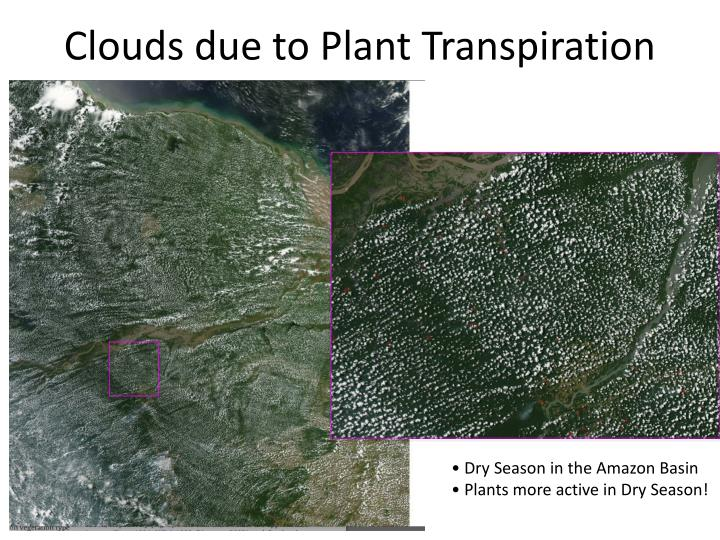 Clouds due to Plant Transpiration