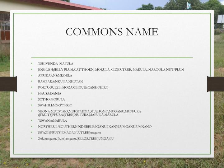 COMMONS NAME