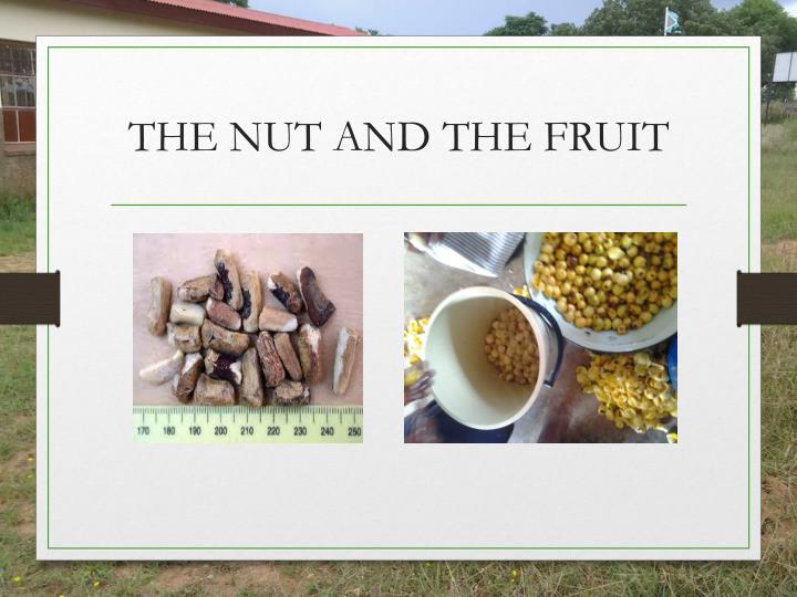 THE NUT AND THE FRUIT