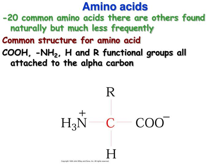 Ppt chapter 4 powerpoint presentation id5857750 20 common amino acids there are others found naturally but much less frequently common structure thecheapjerseys Gallery