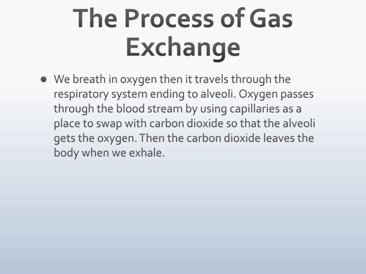 The Process of Gas Exchange