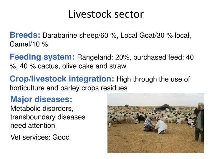 Livestock sector
