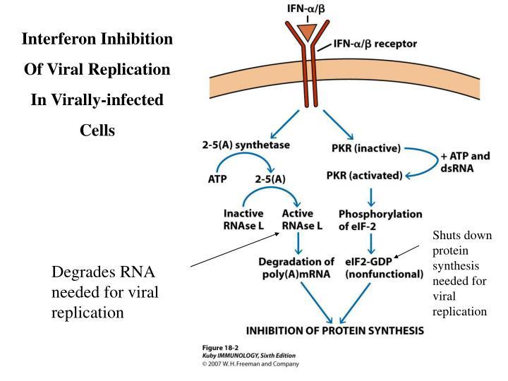 Interferon Inhibition