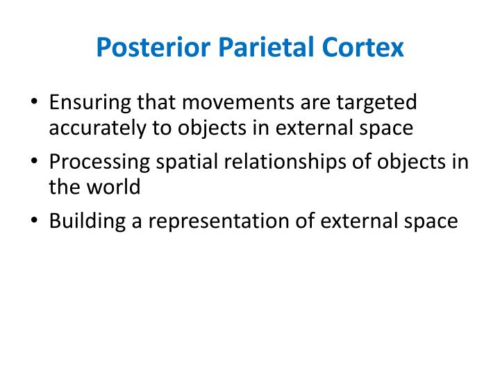 Posterior Parietal Cortex