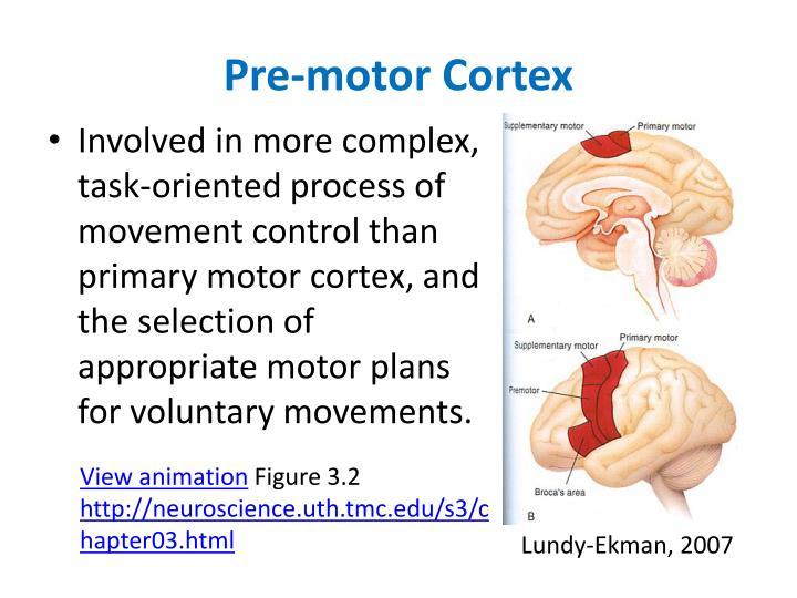 Pre-motor Cortex