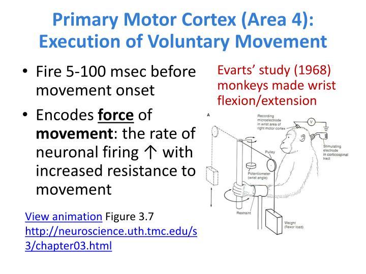 Primary Motor Cortex (Area 4