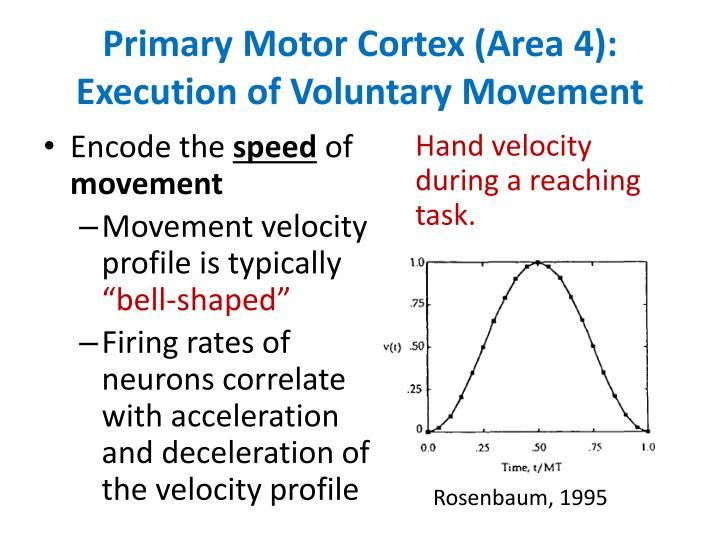 Primary Motor Cortex (Area 4): Execution of Voluntary Movement