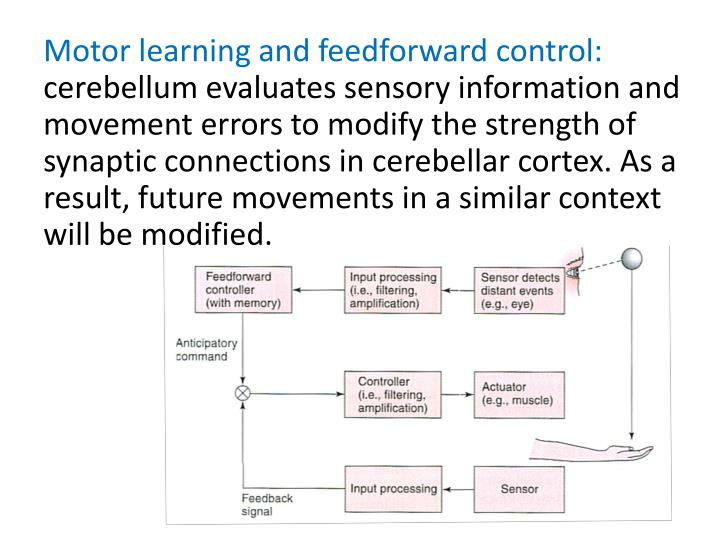 Motor learning and feedforward control: