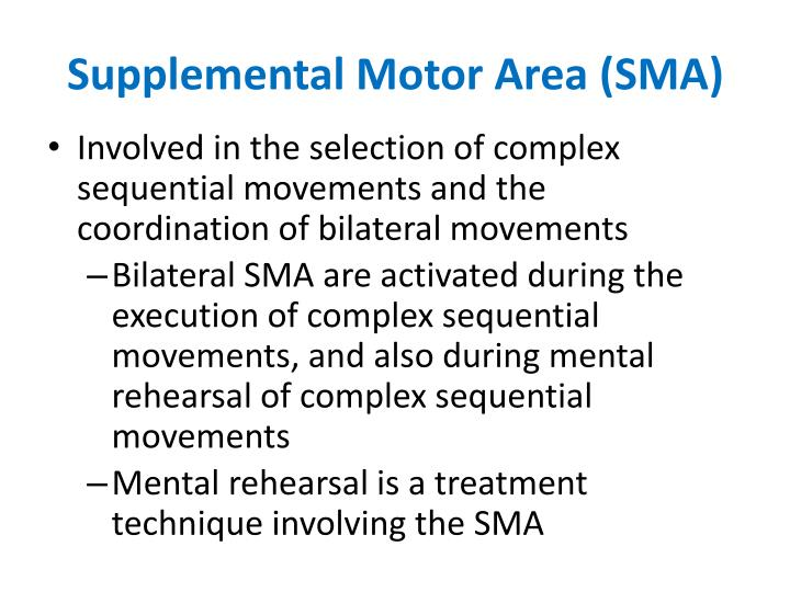 Supplemental Motor Area (SMA)