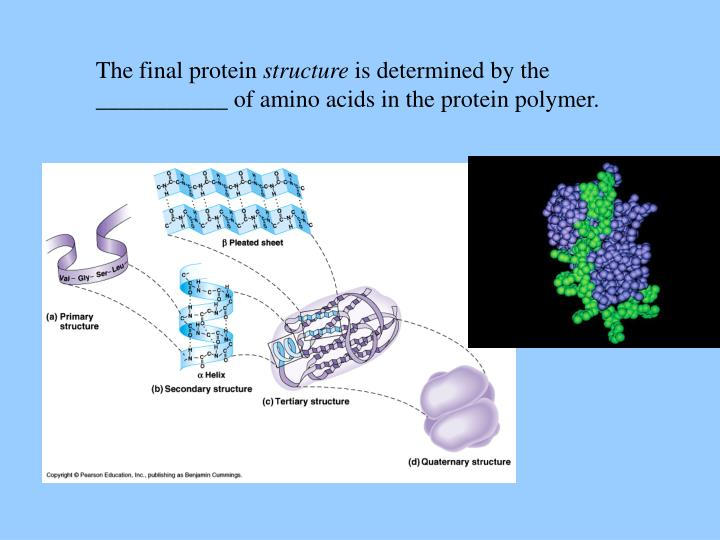 The final protein