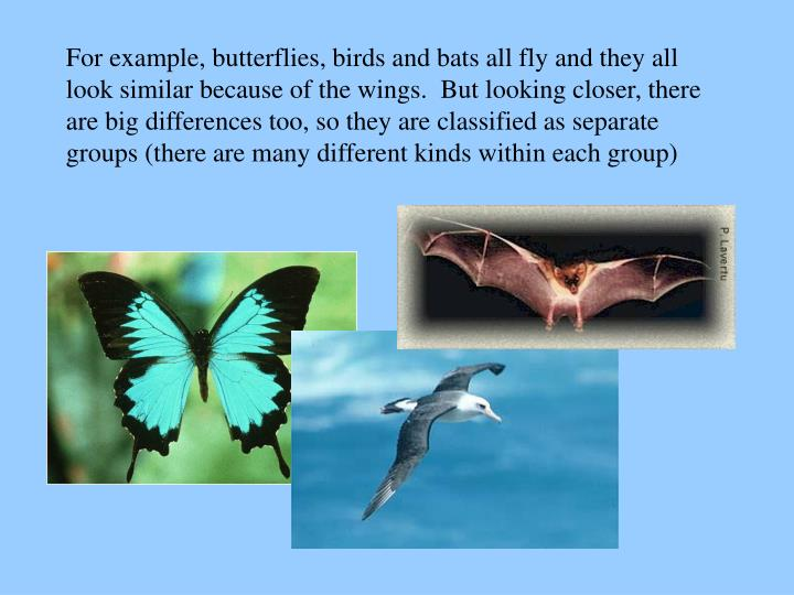For example, butterflies, birds and bats all fly and they all look similar because of the wings.  But looking closer, there are big differences too, so they are classified as separate groups (there are many different kinds within each group)