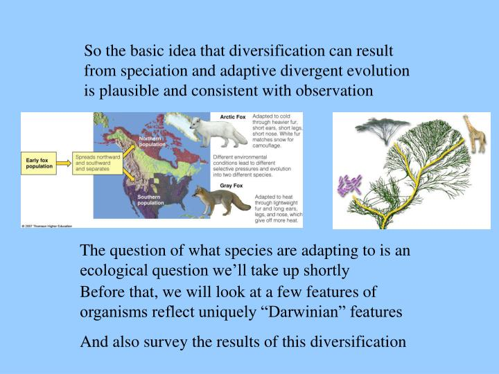 So the basic idea that diversification can result from speciation and adaptive divergent evolution is plausible and consistent with observation
