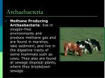 archaebacteria1