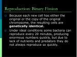 reproduction binary fission1