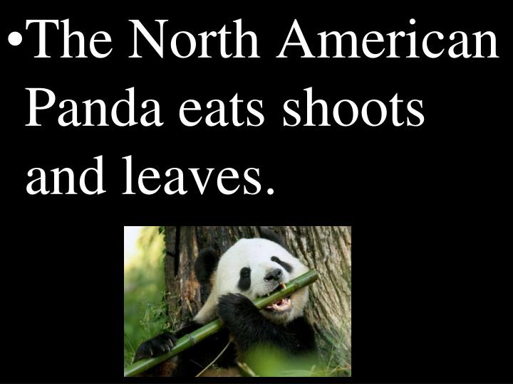 The North American Panda eats shoots and leaves.