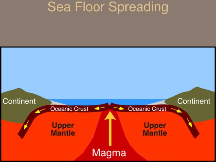 describe how the sea floor is studied When scientists studied the magnetic properties of the seafloor, they discovered normal and reversed magnetic stripes with different widths these magnetic patterns are parallel to the mid-ocean ridges and symmetrical on both sides.