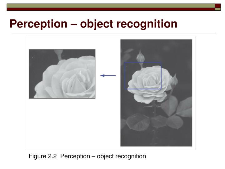 Perception – object recognition
