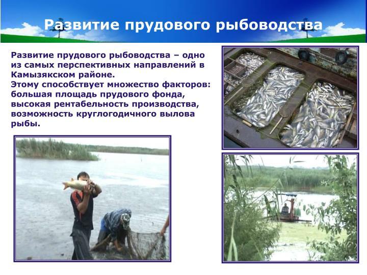 Развитие прудового рыбоводства
