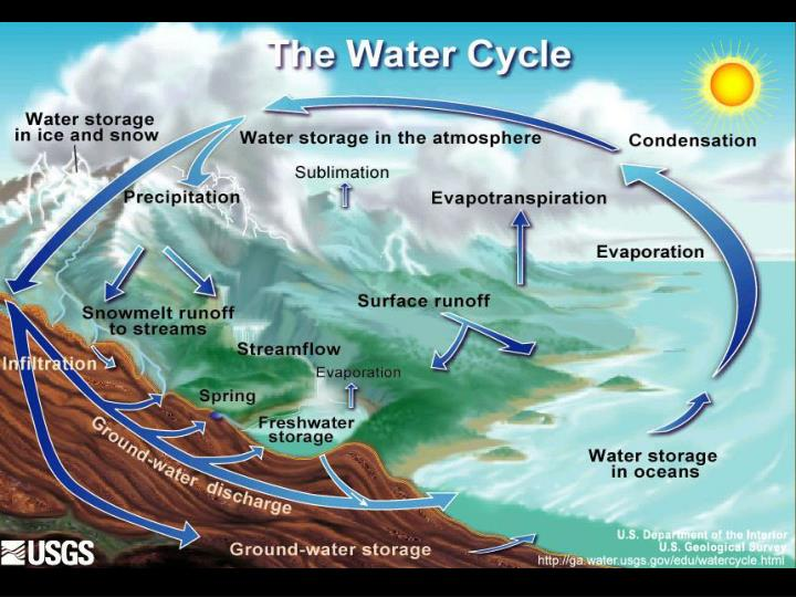 The water cycle compartment and renovation rate