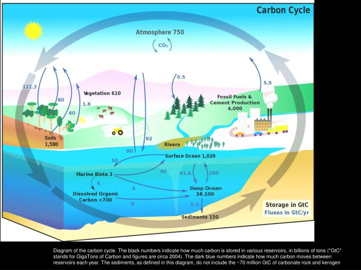 Diagram of the carbon cycle. The black numbers indicate how much carbon is stored in various reservo...