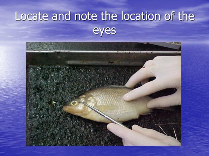 Locate and note the location of the eyes