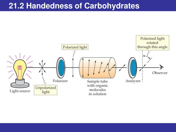 21.2 Handedness of Carbohydrates