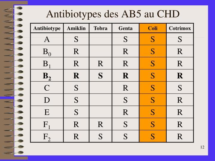 Antibiotypes des AB5 au CHD