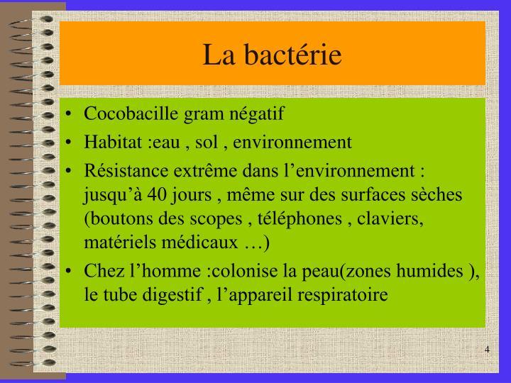 La bactérie