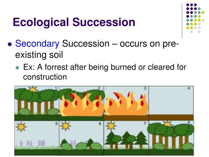 Ecological Succession