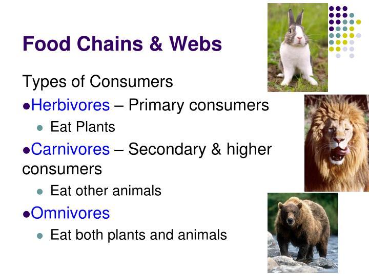 Food Chains & Webs